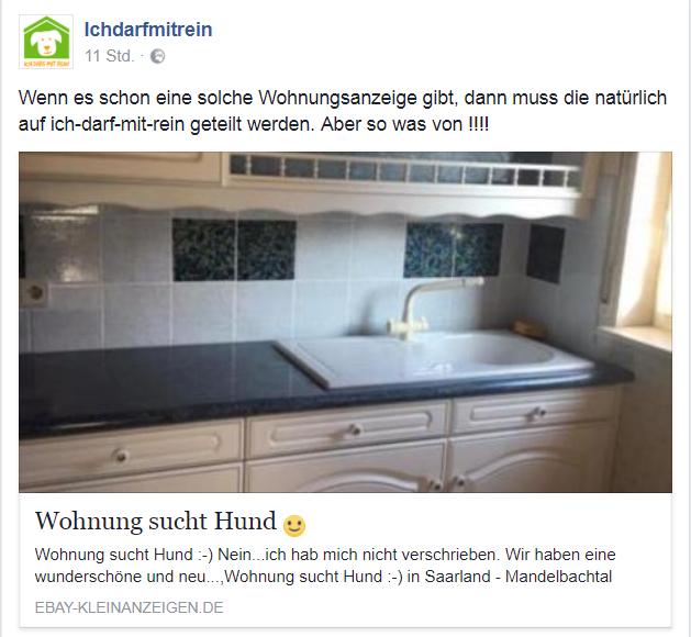 Nachgehakt Hintergründe Zur Ebay Anzeige Wohnung Sucht Hund Ich